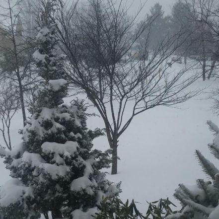 snow frb 2015