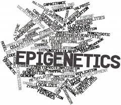 ivf - epigenetics